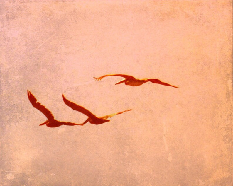 SALE Pelican Beach Art Print  Vintage Pink Orange Peach Three image 0