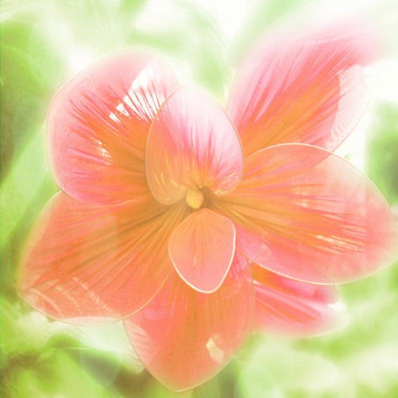 Flower Tropical Pink Art Print  Soft Pastel Green Sunlight image 0