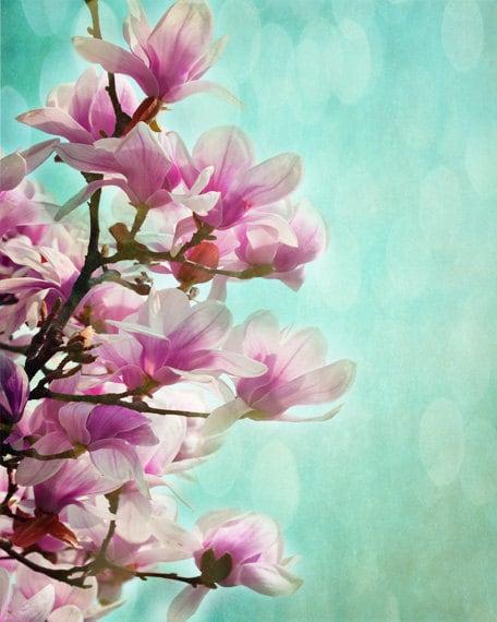 Magnolia Tree Art Print Aqua Pink Bokeh Nursery Wall Art Etsy
