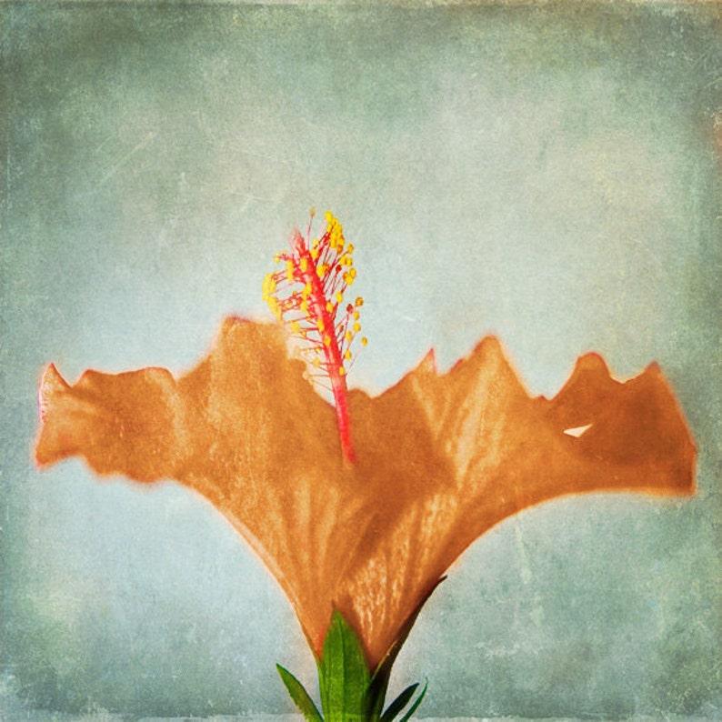 Hibiscus Flower Vintage Tropical Art Print  Aqua Gray Orange image 0
