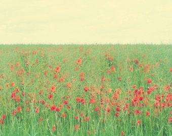 Poppy Field Art Print - Red Green Yellow Country Garden Flower Floral  Home Decor Wall Art Photograph