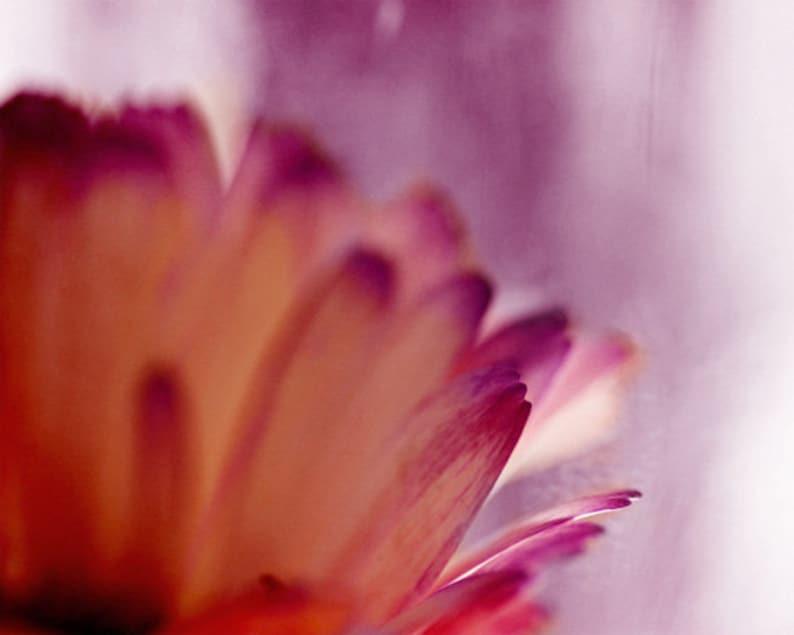 Absract Daisy Flower Art Print  Purple Orange Red Floral image 0