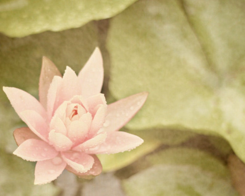 Water Lily Art Print  Pink Green Pastel Dreamy Romantic image 0