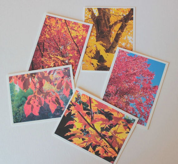 Colorful Fall Leaves Set 1, Box of 10 w/envelopes, Blank Greeting Cards, photo greeting cards, note cards, trees, leaves, orange, yellow