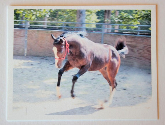 Wild Streak, bucking bronco, note card, blank greeting card, bay filly, equestrian photos, fine art, single card, photo greeting card, horse