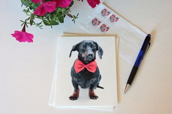 Dachshund, Thank you card, note card, greeting card, red, black, bow tie, dog art, dog photo, single card, photo greeting card, pizzazz,