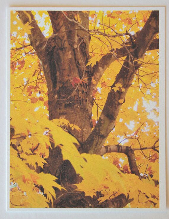Fall Leaves, Abstract in Yellow, note card, blank greeting card, trees, woodland, yellow, gold, fine art, single card, photo greeting cards,