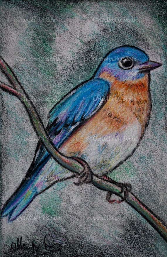 Bird Eastern Bluebird Portrait Pastel Original Drawing Etsy