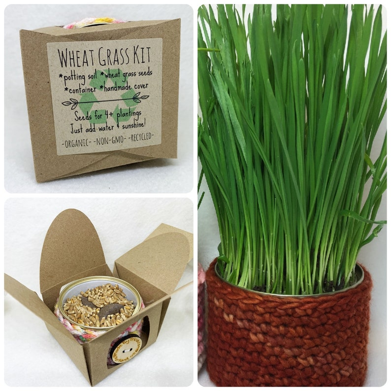upcycled wheat grass kit  pet grass  cat grass  vegan image 0