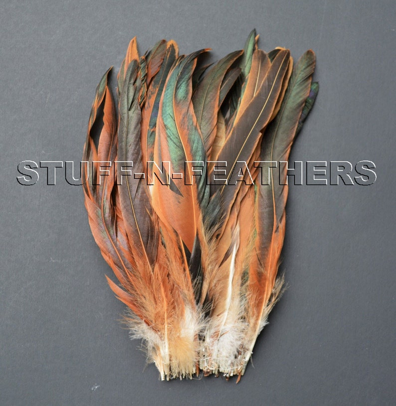 Natural iridescent brown black long rooster tail feathers HALF image 0