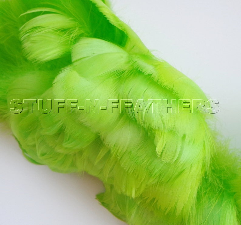 Goose coquille feathers Lime Green small curled real feather image 0