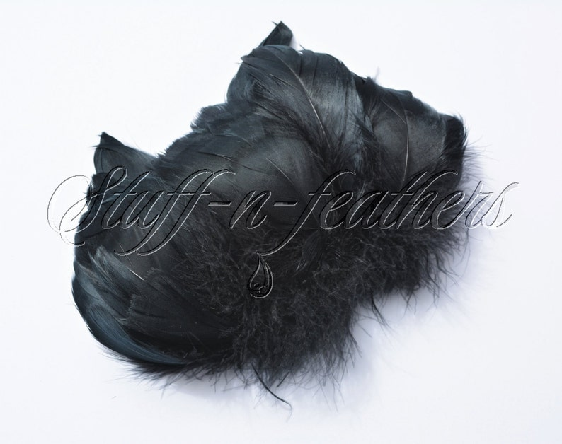 Black Goose feathers black feathers goose coquille for image 0