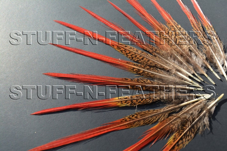 Natural Red tip feathers  Golden pheasant thin spiky real image 0