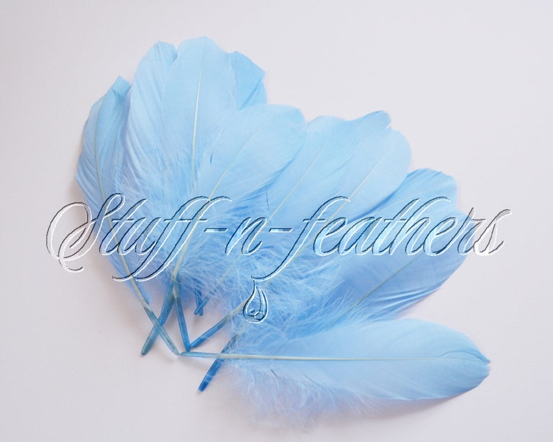 Goose feathers Baby BLUE goose pallets feathers light blue image 0