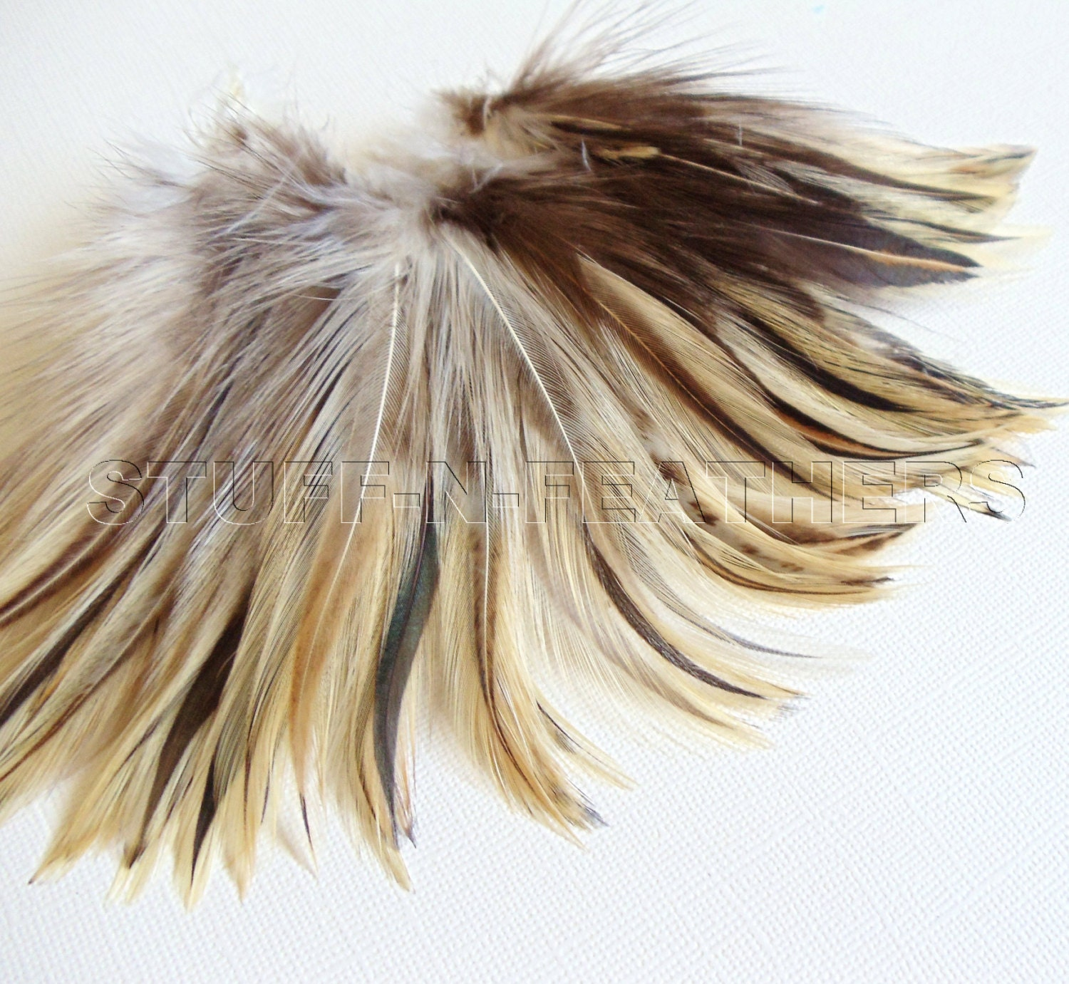badger-cock-hackle-feathers-movie-with-a-lot-of-sex