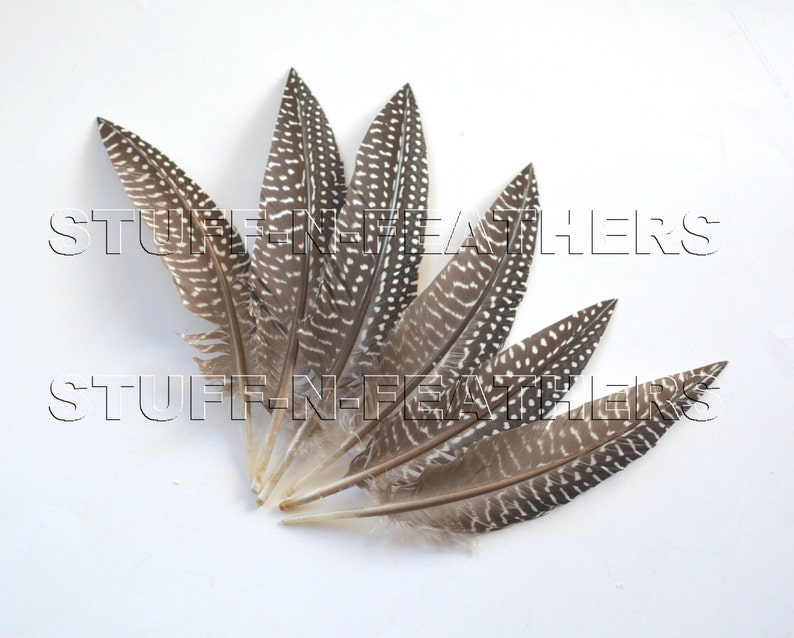 Guinea wing feathers trimmed natural black brown white polka image 0