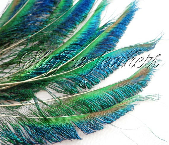 Metallic Iridescent Natural Peacock green 50  Feathers Hair Extensions