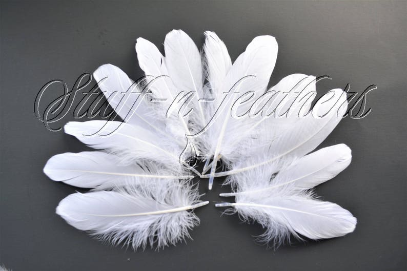White GOOSE feathers pallets loose white feathers for image 0