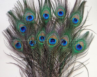 Premium quality natural small PEACOCK feathers - Small/Medium or Medium/Large eyes for millinery, weddings, crafts / 8-12 in, 12 pcs / F104