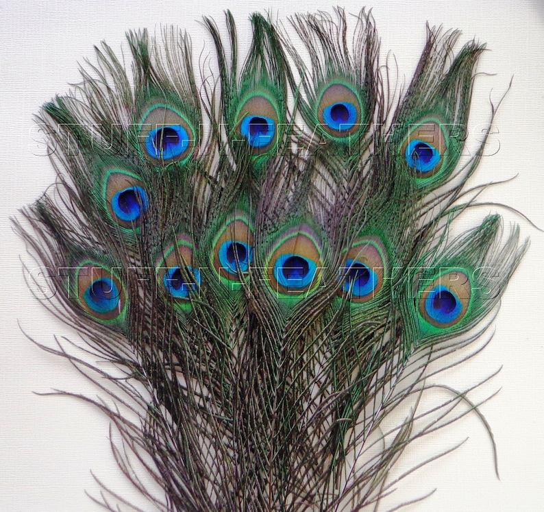 Peacock feathers Premium quality natural feathers image 0