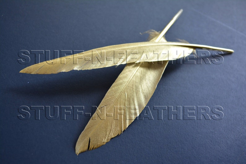 GOLD feathers painted feathers duck feathers real feathers image 0