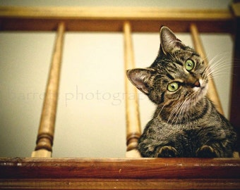 Fine Art Photograph, 4x6 picture of cat sitting in between wooden banister beams, photograph print of kitty with green eyes, curious feline
