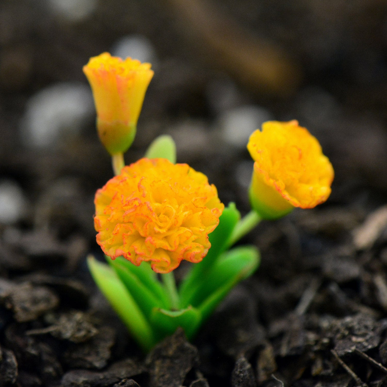 Miniature Orangeyellow Carnation Flower Glass Terrarium Etsy