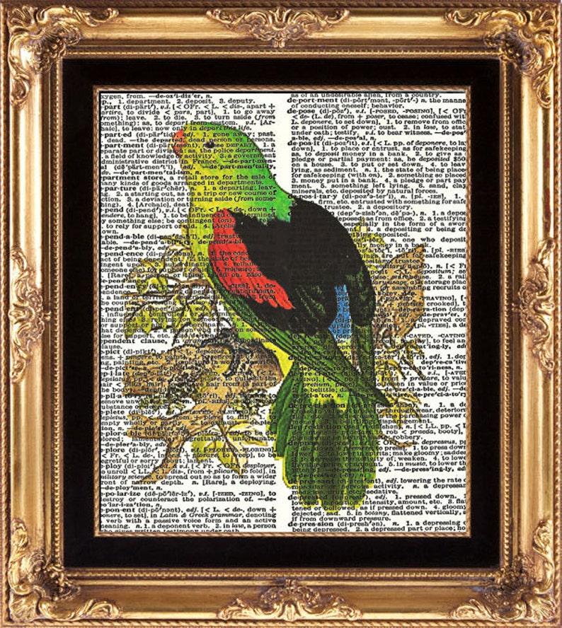 Vintage//Retro DICTIONARY PARROT Bird Vintage print//wall art A4//A3 Wall Decor