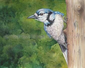 PRINT of Blue Jay Watercolor Painting, Bird Painting, Watercolor Print, Bird Art Print, Wall Art, Home Decor, Wildlife Illustration, Nature