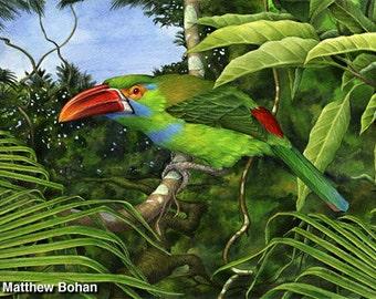 Watercolor Painting, Watercolor Print, Bird Painting, Bird Art, Wall Art, Home Decor, Wildlife Nature, Crimson-rumped Toucanet, Framed Print