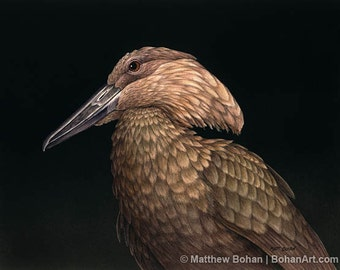 ORIGINAL Watercolor Painting of Hammerkop, Bird Painting, Bird Art, Wall Art, Home Decor, Wildlife Nature, Stork, Brown Black, FREE SHIPPING