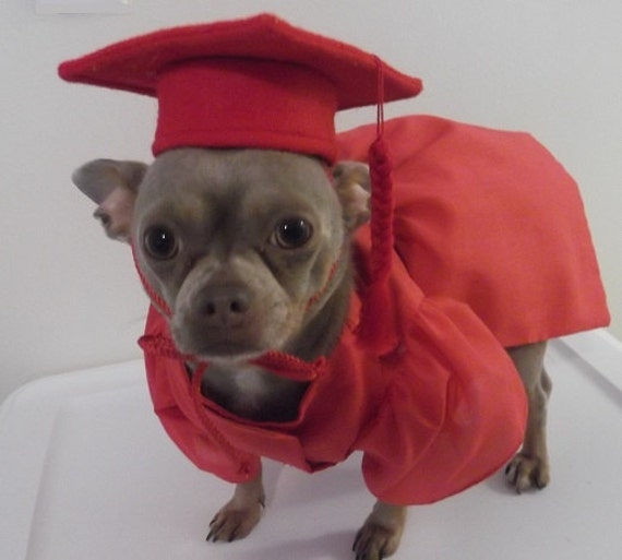 Halloween Dog Costume Pet Graduation Cap And Gown Dog Cap Etsy