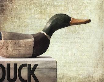 DUCK - Fine Art Digital Print