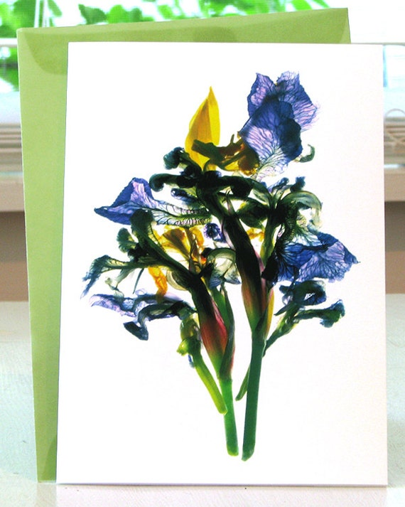 """Floral Note Card Todd's Pond Iris 5""""x7"""" Summer Flower Thank You Card"""