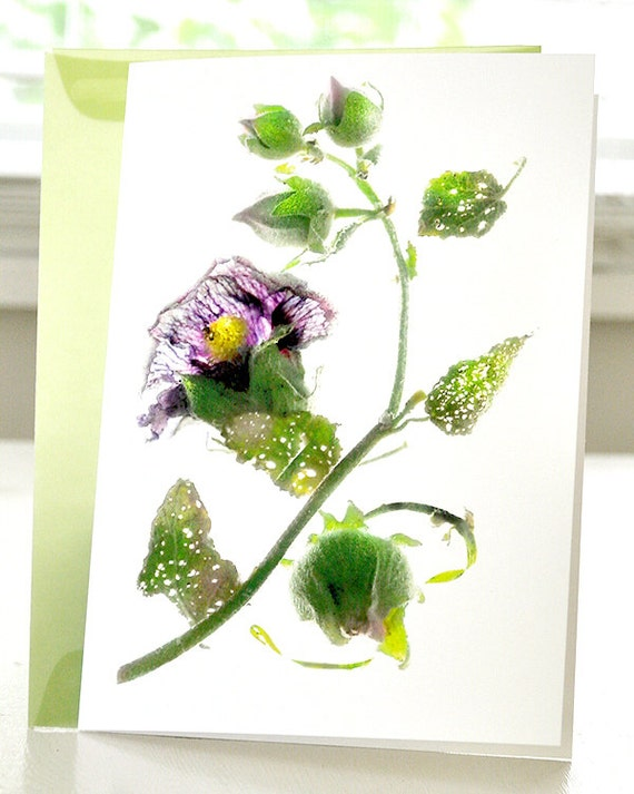 Artist Floral Note Card - Margie's Rose of Sharon - Free Shipping in the US
