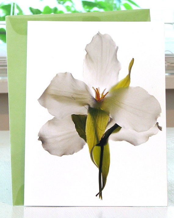 Note Card Todd's Trillium Dance Digital Original Print free Shipping in Us