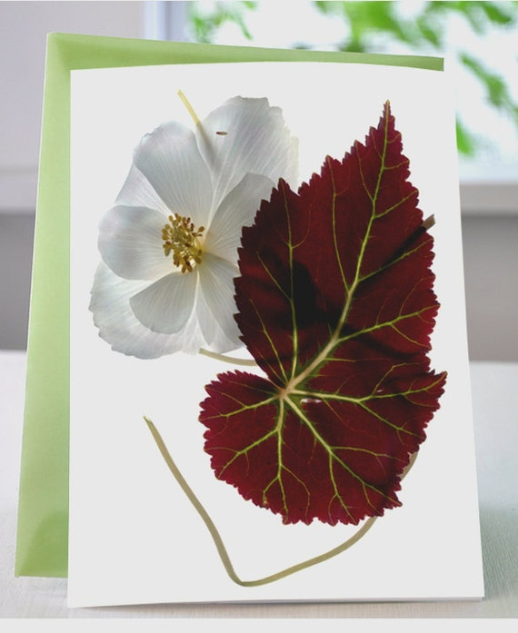 Floral Note Card White Begonia with Leaf Note Card