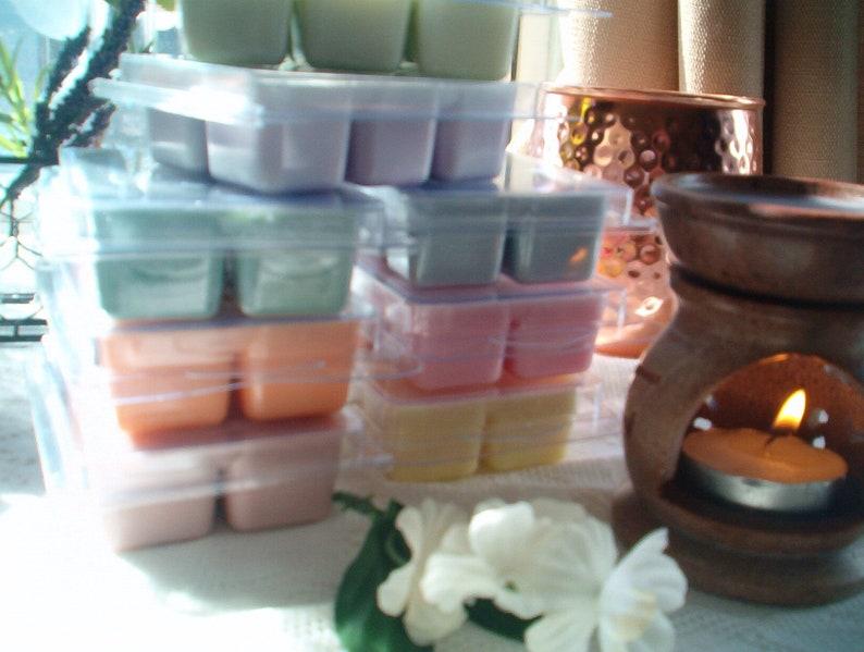 Pine Clean Refreshing Wax Melts Soy Wax Melts Winter wax Melts Fresh Evergreen Wax Melts Aromatic Rich Woods /& Cedar A Best Seller