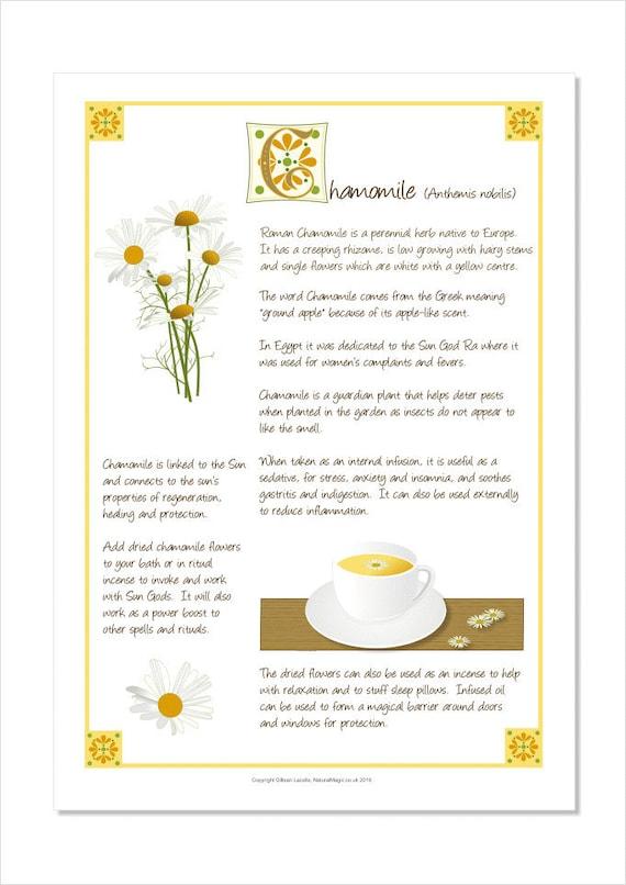 Magical Herbs - Chamomile - Print