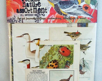 deluxe nature vintage collage assortment