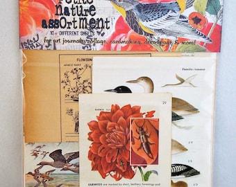 petite nature vintage collage assortment