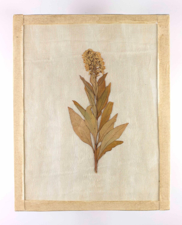 8x10 Vintage Inspired Botanical Pressed Flower Etsy