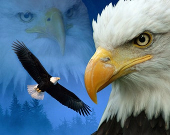 Fleece Blanket Eagle American Bald Eagle Soft Blanket or Throw