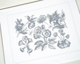 Botanical Art Collection 5 in Grey Blue with Hellebore & Primrose Flowers Archival Quality Print on Watercolor Paper