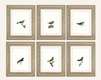 6 Set of Indigo & Emerald Birds Naturalist Drawing Archival Quality Prints