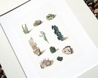 Mineral, Crystal & Lichen Study in Greens and Pale Grays Archival Print