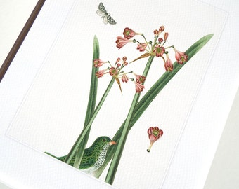 Botanical Pink Lily, Emerald Green Bird & Green and White Butterfly Archival 8 x 10 Print