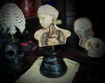 DISSECTION  TORSO with head n1 . Antique anatomical model. Medical study miniature for dollhouses 1/12   scale by D. ZALVEZ