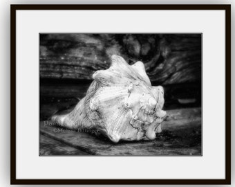 Seashell Conch Shell Still Life Black & White Rustic Beach Cottage Nautical Art Fine Art Photography Print