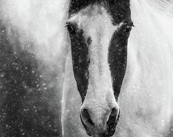 Horse in Winter Snowstorm Fine Art Photography Print, Black and White Equine Horse Lover, Horse Photography, Horse Prints, Equestrian Gifts